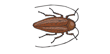 A brown cockroach.
