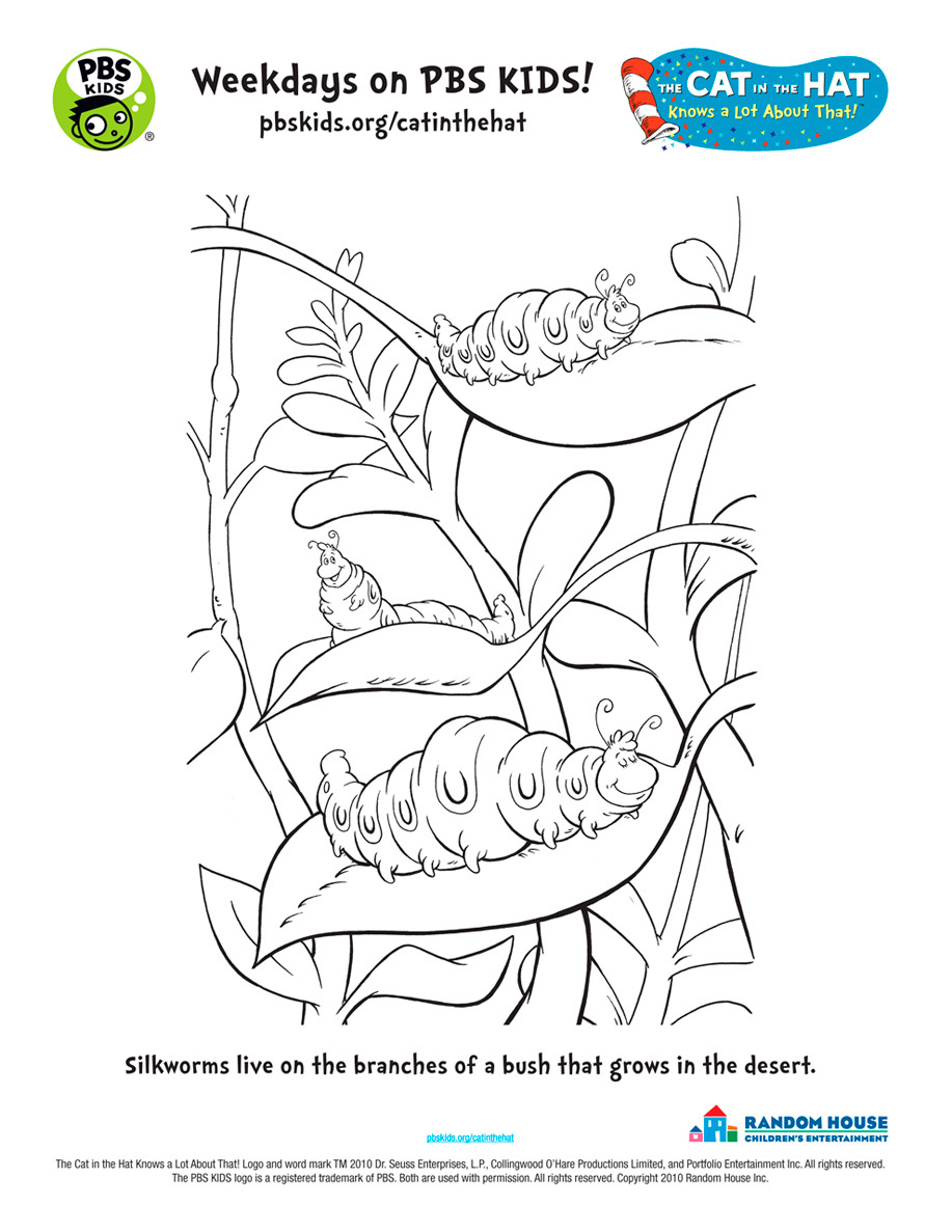 cat in the hat characters coloring pages virtren com