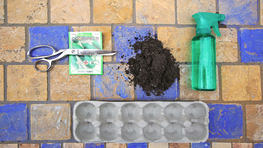 Grow Seedlings in an Egg Carton | Crafts for Kids | PBS KIDS for Parents