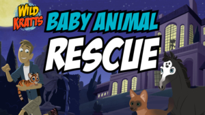 Wild Kratts Baby Animal Rescue