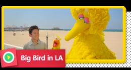 Big Bird in LA