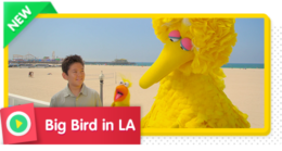 Big Bird in LA