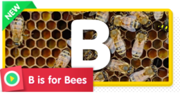 B is for Bees