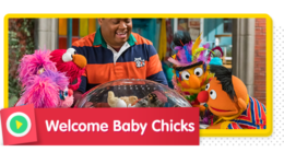 Welcome Baby Chicks