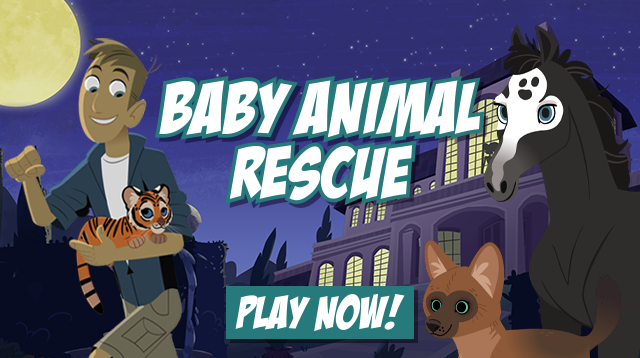 Baby Animal Rescue Card